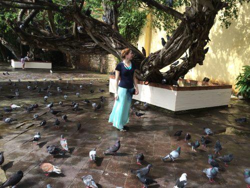 Pigeon Park San Juan PR
