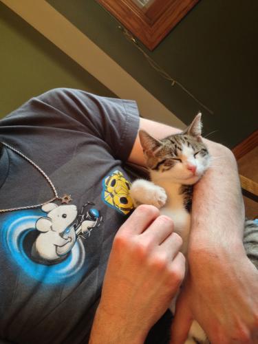 Pixel Tasman Kitten