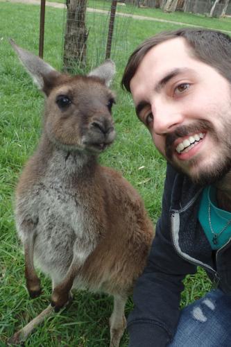Cleland Wildlife Kangaroo Adelaide Australia